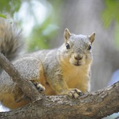 Critter Roundup: Squirrel School