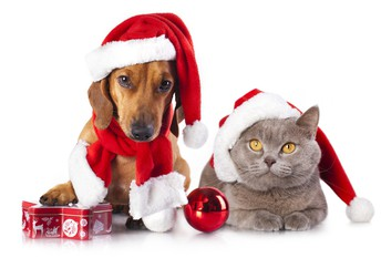Christmas collection for the SPCA