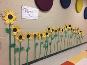 Our field of Sunflowers!