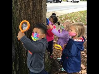 LLC Tree Study
