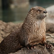 Meet Our Otters!