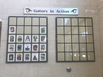 Gators of the Week:  Gator in Action