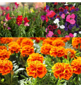 Don't Miss the Horticulture Plant Sale!