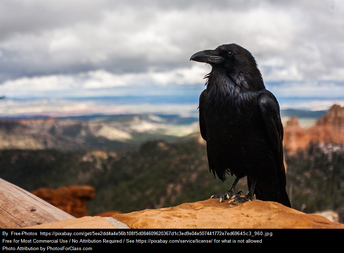 This is a crow