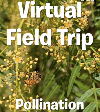 Part 1: Why pollinators and plants need each other
