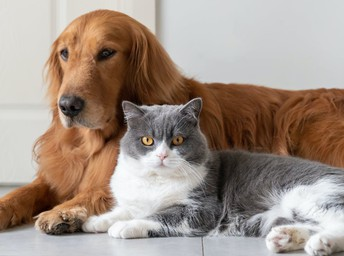 Survey Says: Cats or Dogs?