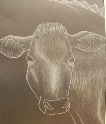 Beautiful bovine