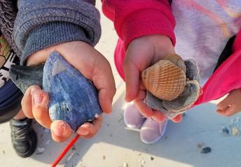 Jayden holds a dark, triangular shaped shell; Brianna holds several pink fan-shaped shells
