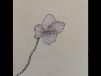 Lilija's Object Art