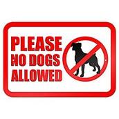 Perros en el campus