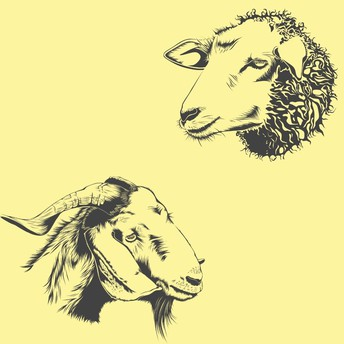 Webster County Sheep & Goat Weigh In