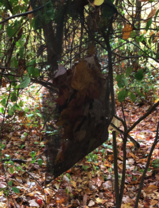 Students Study Drought Effects on Leaf Litter Ecosystems