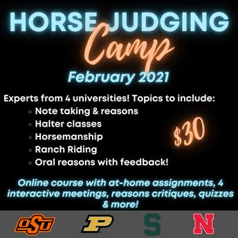 Virtual Horse Judging Camp 2021