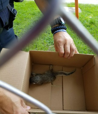 "a baby squirrel tried to ""drop in"" to school"