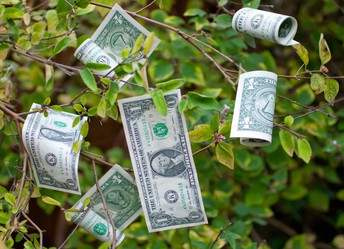 money grows on trees  for kindergarten Families