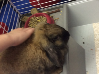 New Bunny in 2nd Grade