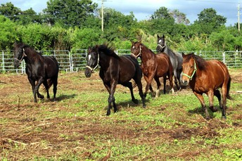 Raising Funds for FRIENDS, a Horse Rescue and Sanctuary by Marina