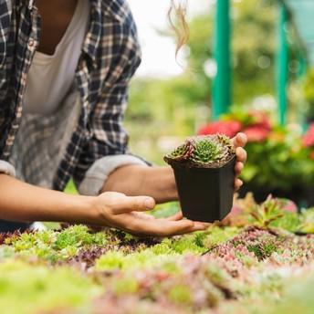 Online Horticulture Judging