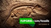 Explorer Series: Fossils