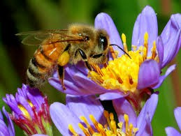 bees make you happy, then Join Arbor Club!