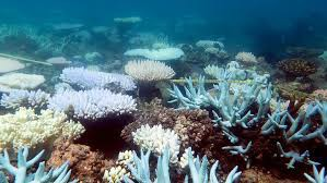 Virtual Tour: The Great Barrier Reef
