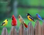 Birds, birds, birds!