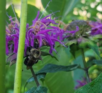 Pollinator at Work!