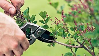 Pruning Class