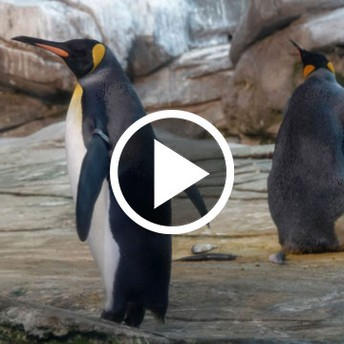 6 Zoos & Aquariums offering Live Videos