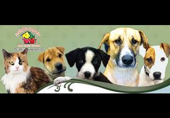 Keokuk Animal Services - March 22nd