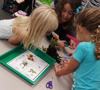 Dissecting Plants
