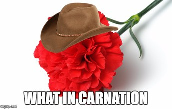 Show Someone You Care with a Carnation