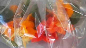 Edible Flowers - Nasturtiums