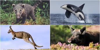 Life Science: Animals