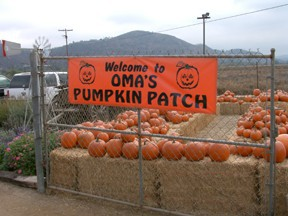 Oma's Pumpkin Patch