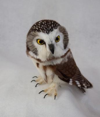 owl 3 day class