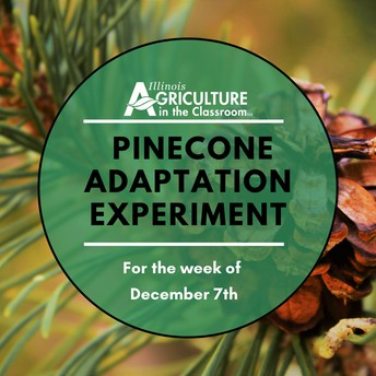 Pinecone Adaptation Experiment
