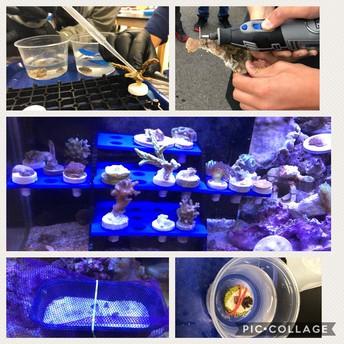 Aquatic Studies work with Corals