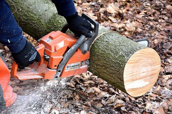 Ensure You Will Get The Correct Aid For Trees In Your Lot