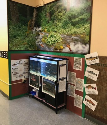 Our Educational Trout Center