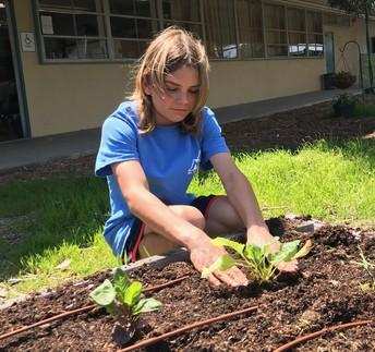Seeking Parent Volunteer(s) for the MEA Garden