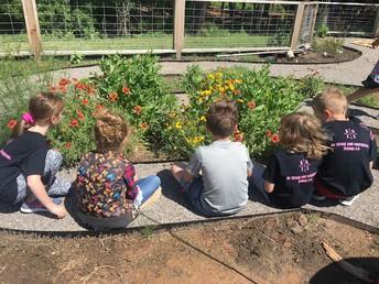 Promoting Pollinators