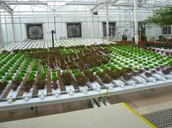 The Worst Advice We've Ever Heard About Hydroponic Grow System