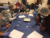 Performing Surgery in fifth grade
