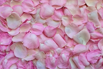 Flower Petals for Piping Up