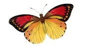 Support the butterfly garden