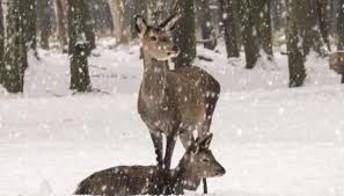 Spruce Run Family Programming - Saturday, January 13