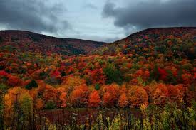 Fall Activities and Local Places to Go