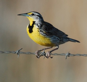 Dramatic Decline in Bird Populations