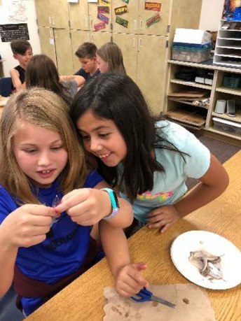 Students examining a squid at Navarrete Elementary